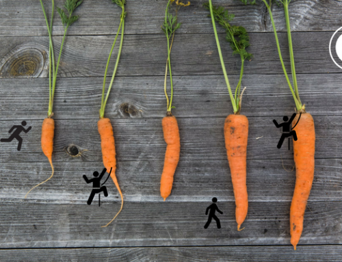 Compensation and Benefits – All about the Carrot, not the Stick!